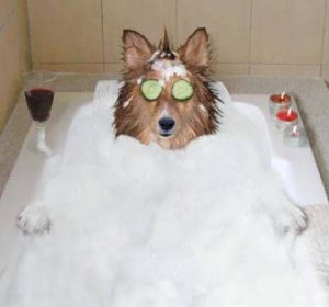 dog bath at pawsh grooming spa in panama city beach fl