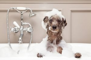 Dog Grooming Services near  Panama City Beach Condos